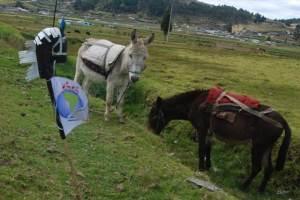 Rosendo y sus amigos burros