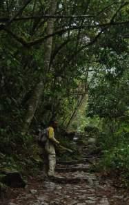 Por el sendero hacia Machupicchu