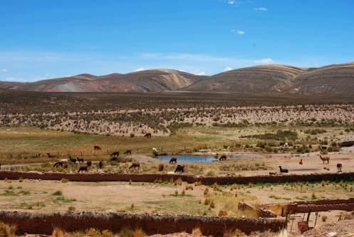 Las llamas en el Norte de Argentina