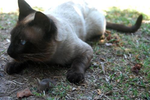 El Gato y el Ratón, buscando comida