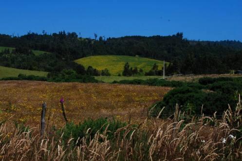 campos de Chiloé