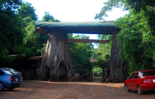 entrando a la historia de los árboles