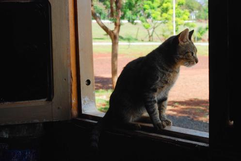 el gato bombero...