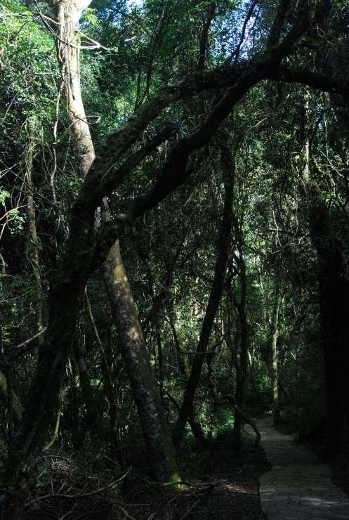 entre raíces