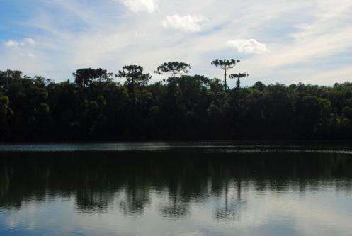 el reflejo de los pinheiros sobre un espejo dorado