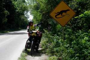 Iguanas en la vía