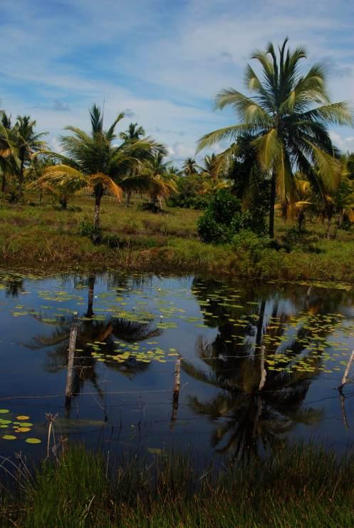 de palmeras y aguas