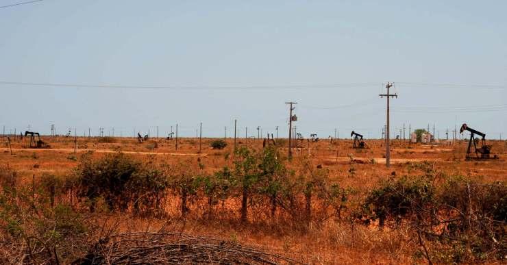 """""""Bosques"""" de petróleo"""