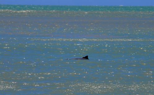 delfines en la orilla