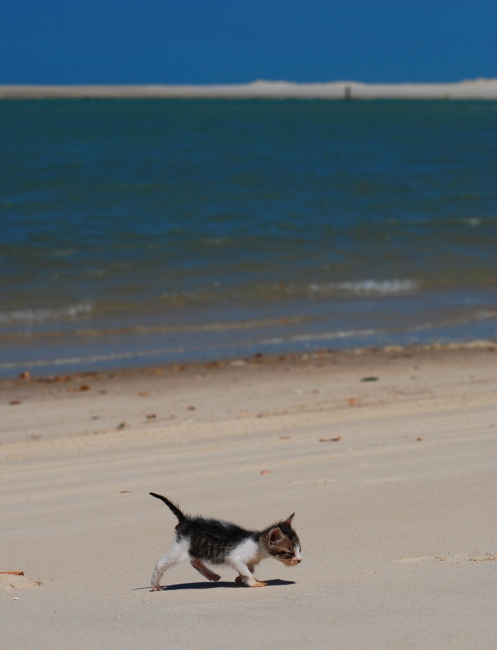 Pedalinho en la playa