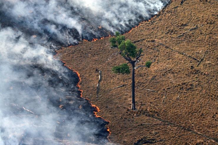 Fotografìa de Rodrigo Baleia para Greenpeace_Alta Floresta