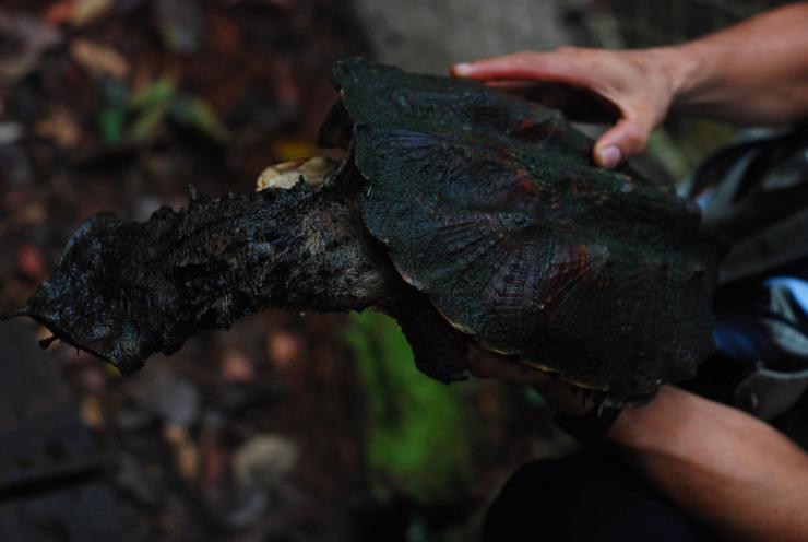 tortuga prehistórica